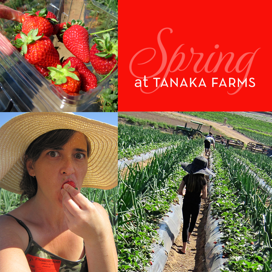 Strawberry picking at tanaka farms secret agent josephine