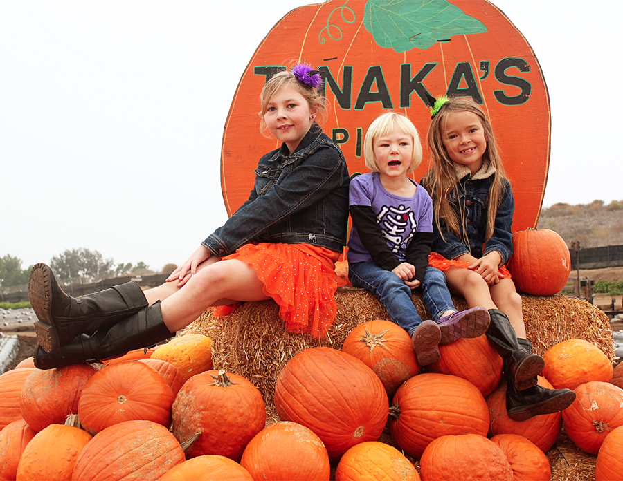 pumpkinpatch2013-2