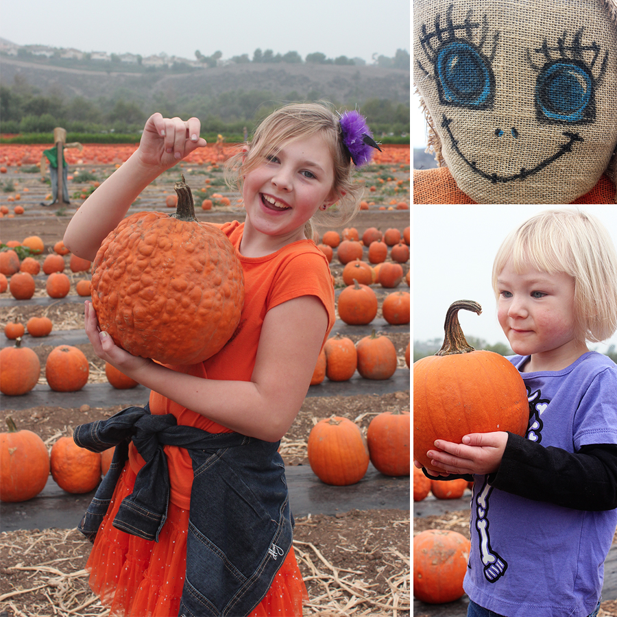 pumpkinpatch2013-4