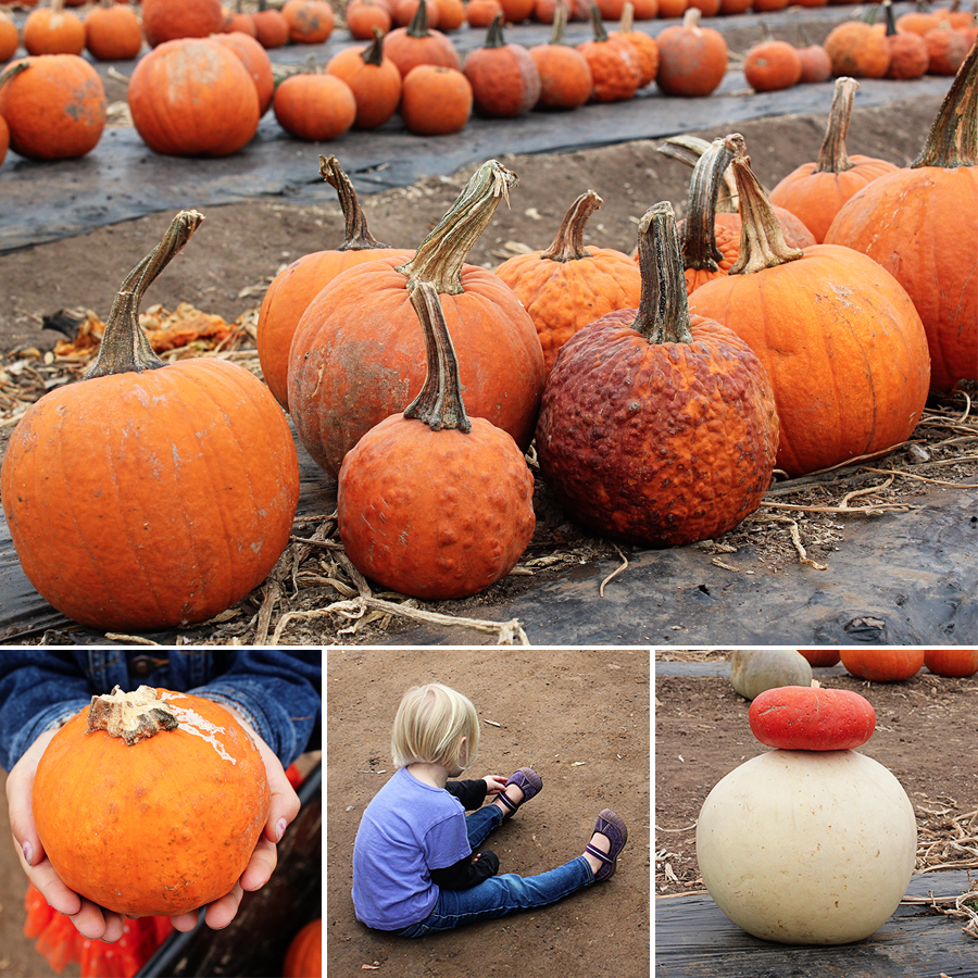 pumpkinpatch2013-5