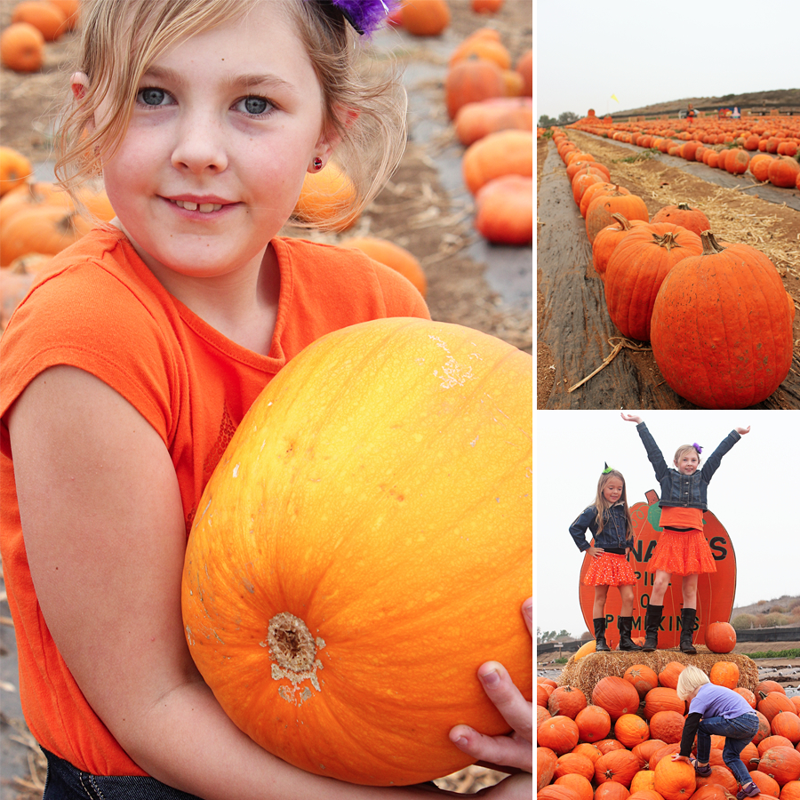 pumpkinpatch2013-6