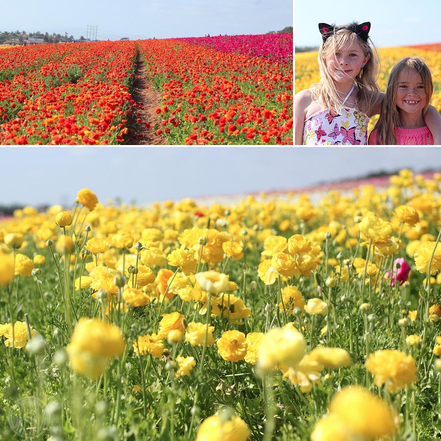 flowerfield-1