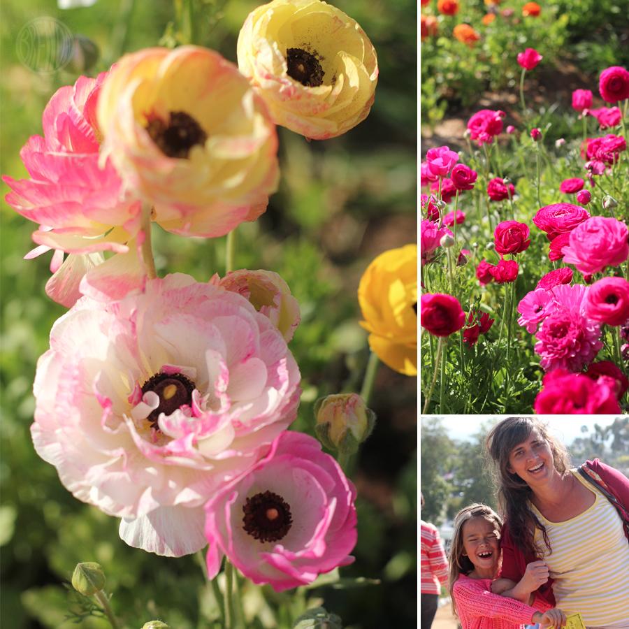 flowerfield-2