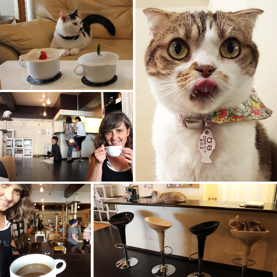 Cat Welfare Society
