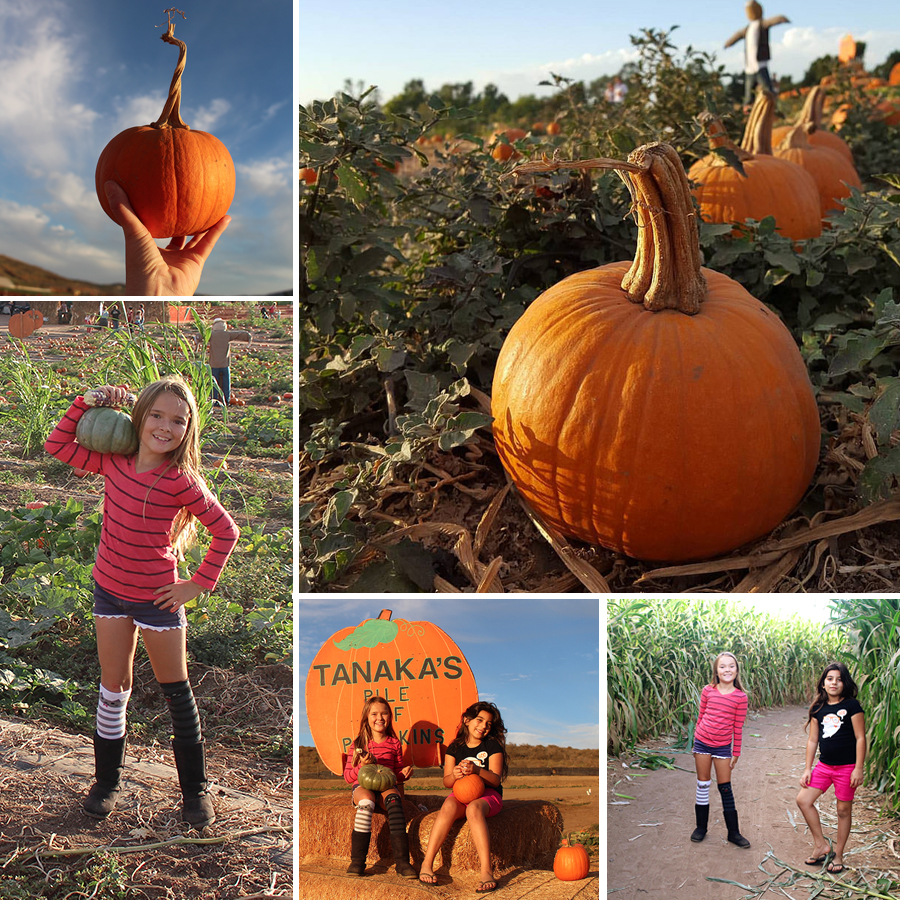 pumpkin-patch-2015