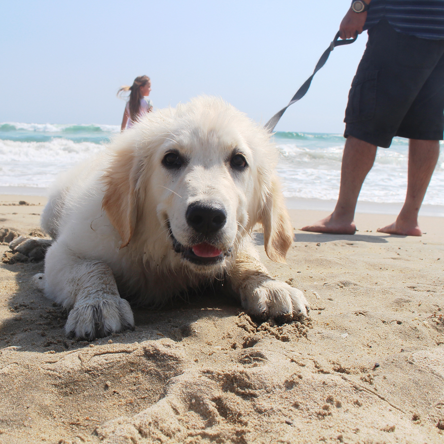 dog-beach1
