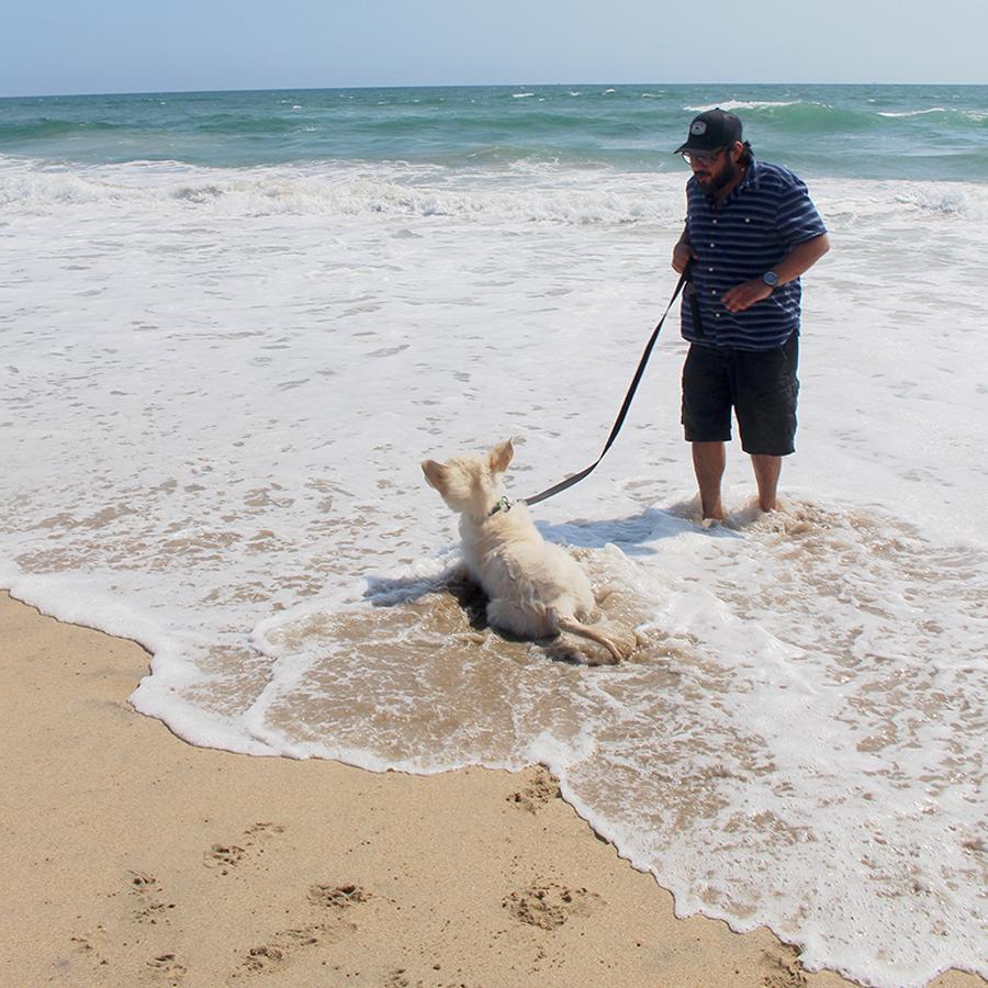 dog-beach4
