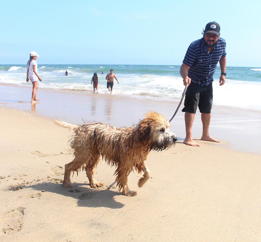dog-beach6