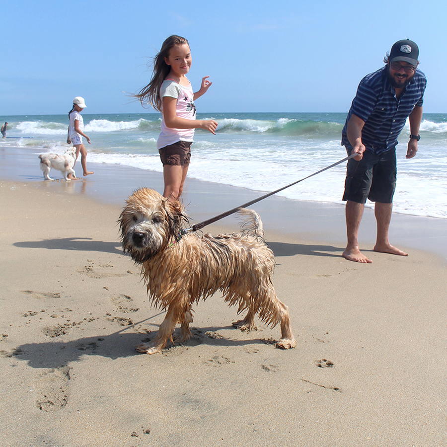 dog-beach7