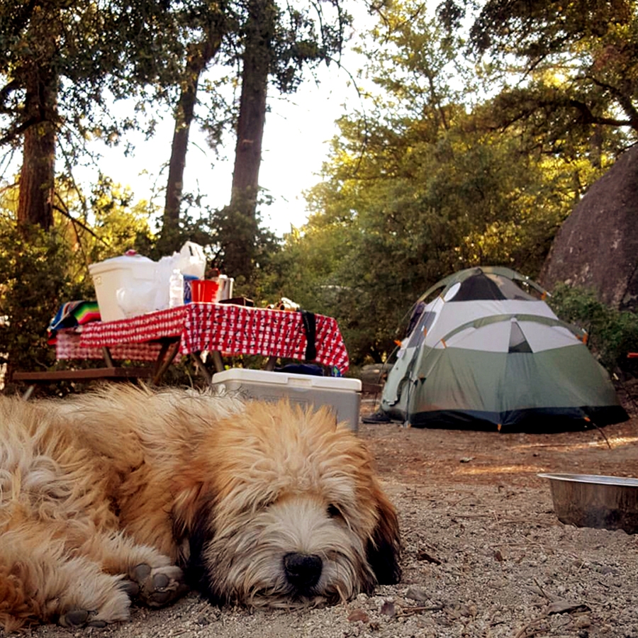 camping-with-dogs-1