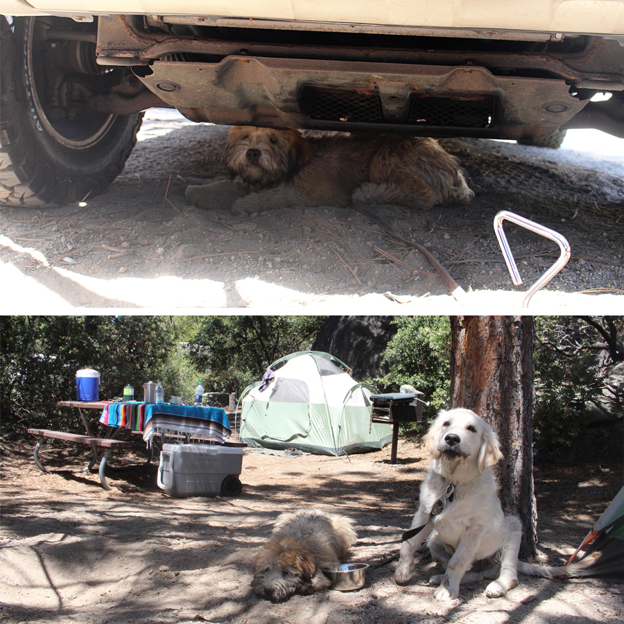 camping-with-dogs-10