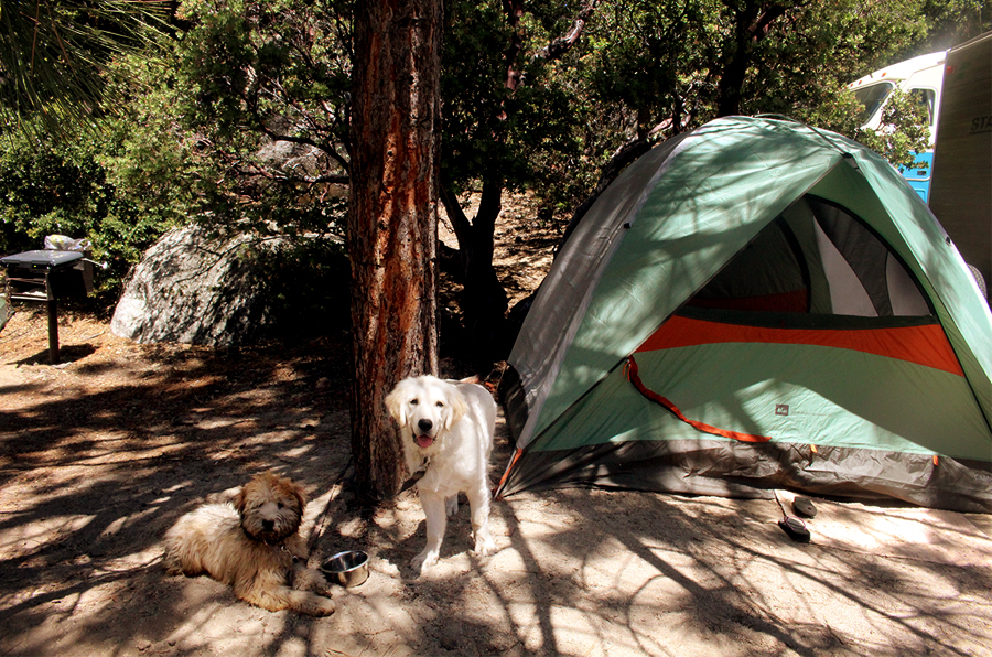camping-with-dogs-2
