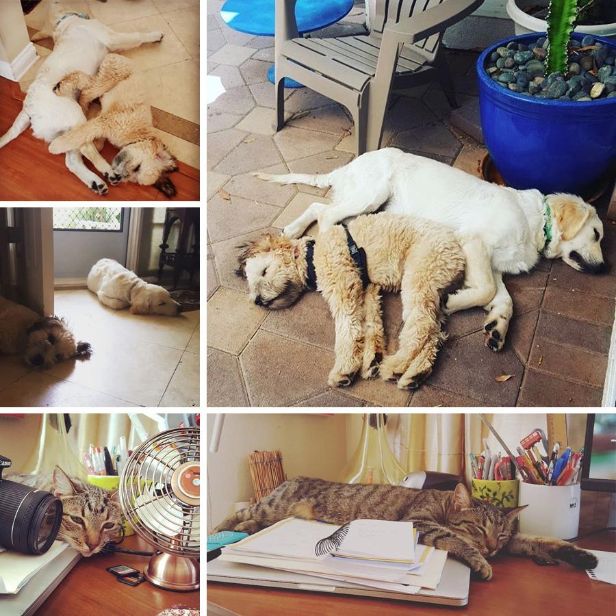 lazy-summer
