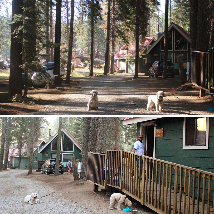 cabin-at-dinky-creek-1