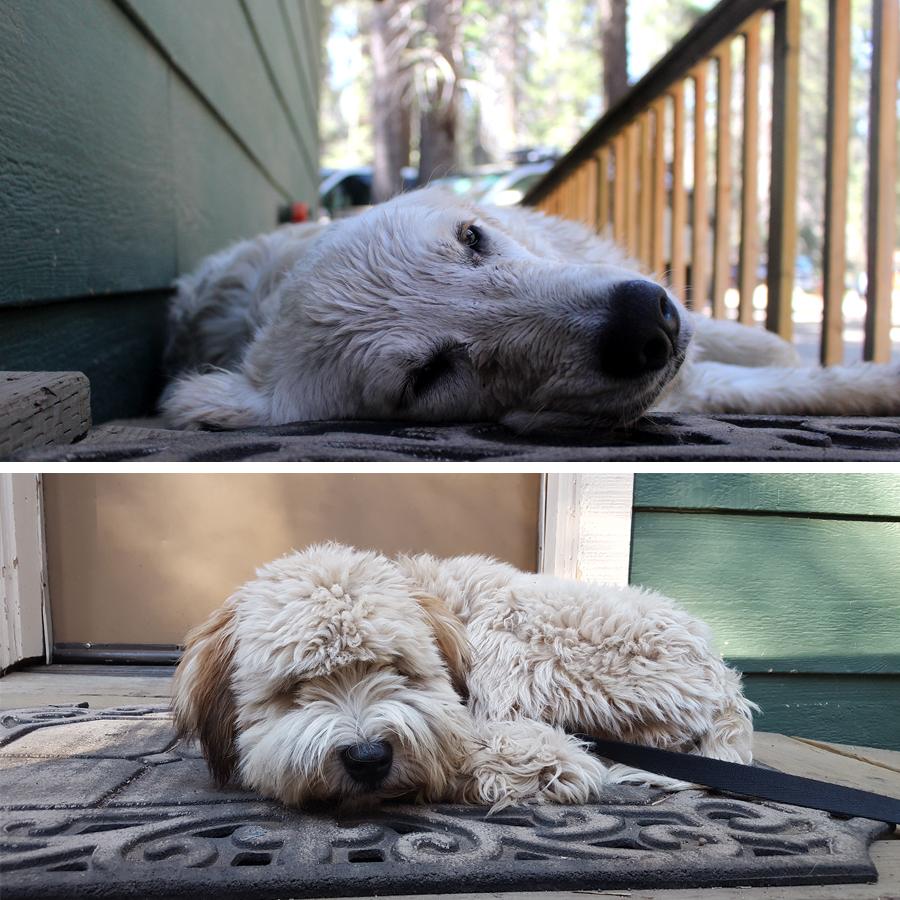 sleepy-river-dogs