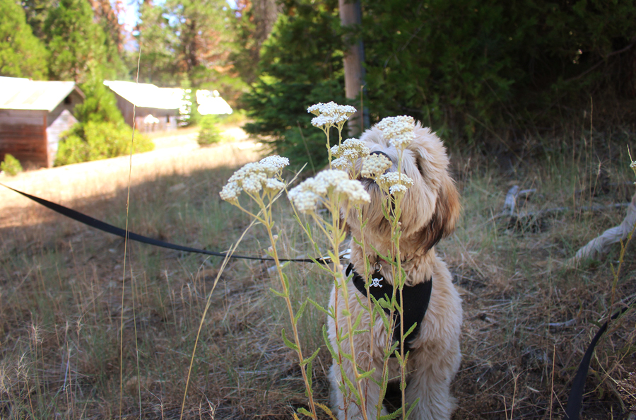 whiskey-smells-the-flowers