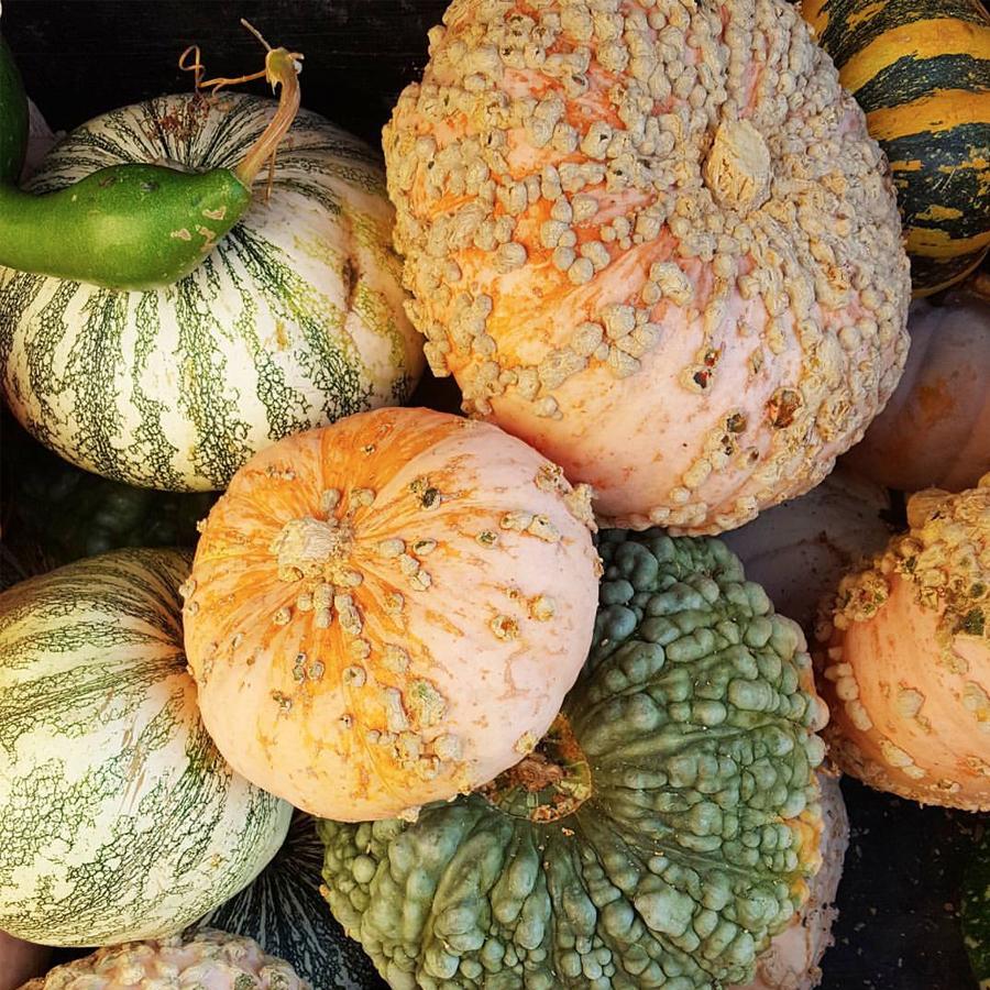 decorative-gourd-season